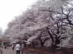 image/2012-04-17T08:07:43-1.jpg