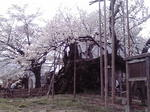 image/2012-04-17T08:07:43-2.jpg