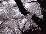 image/2012-04-27T10:45:02-1.jpg