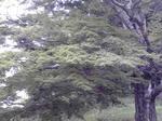 image/2012-06-24T13:23:08-1.jpg
